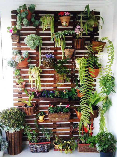 Outdoor Plants for Minimalist Small House
