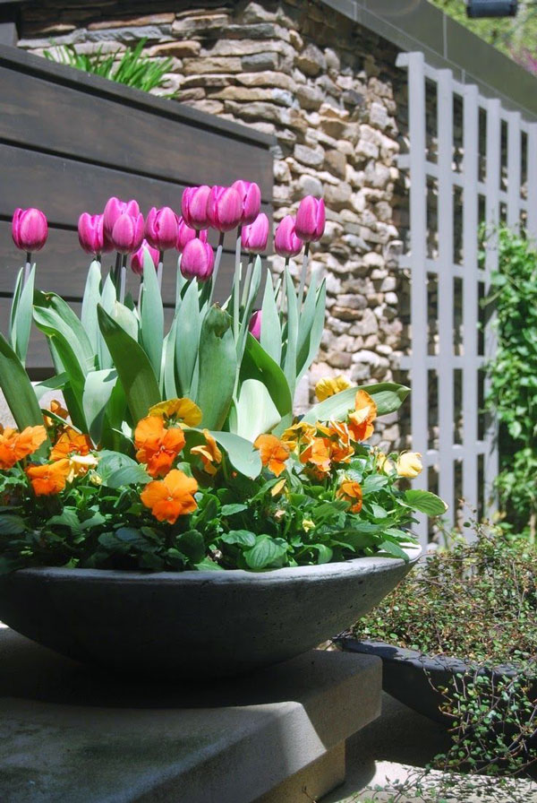 Tulips Outdoor Plants