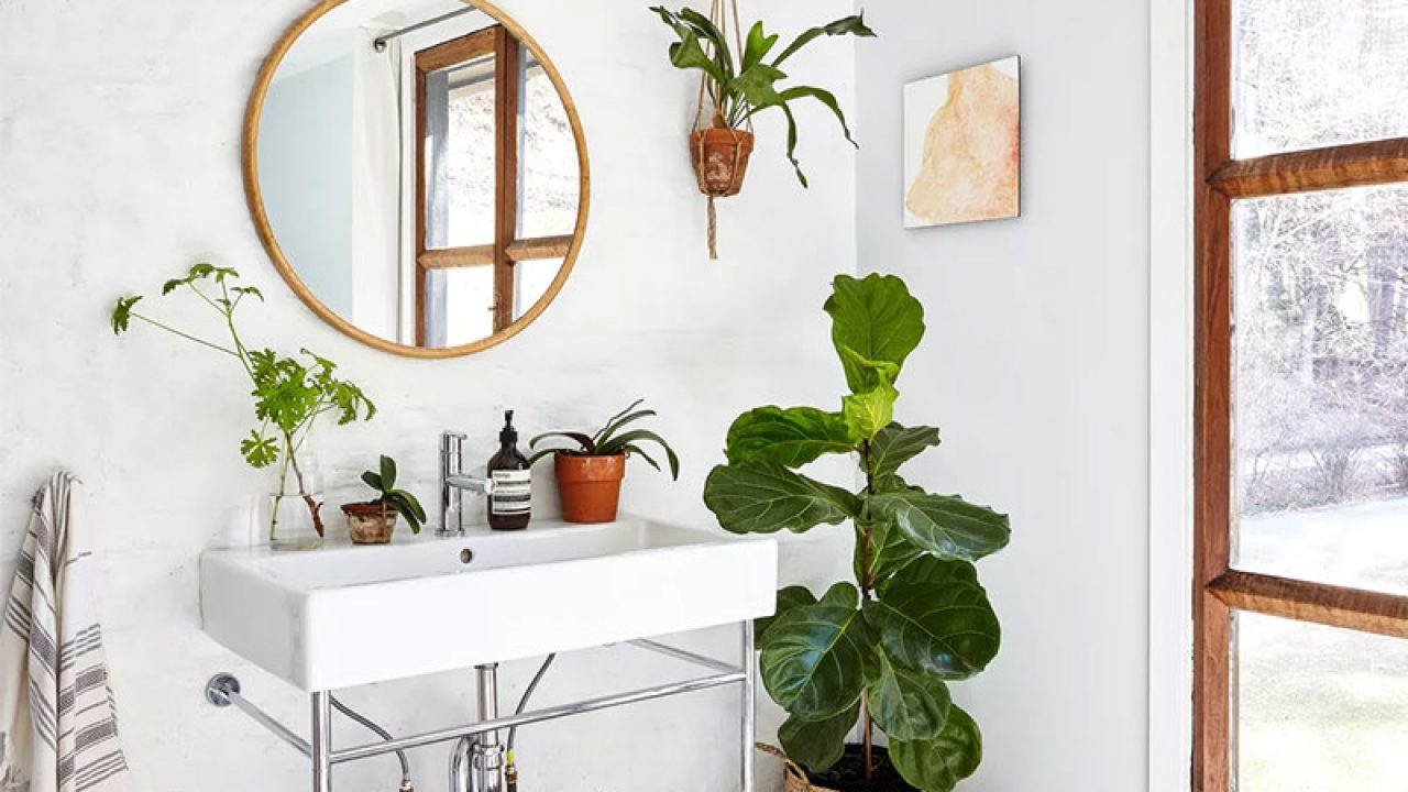 Make Your Bathroom Feel Fresh with Plants Decors Ideas   RooHome