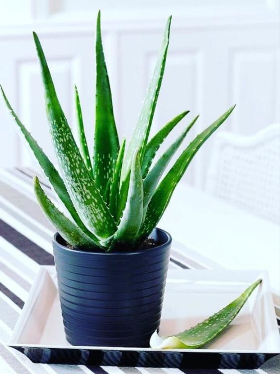 beautiful bedroom with aloe vera