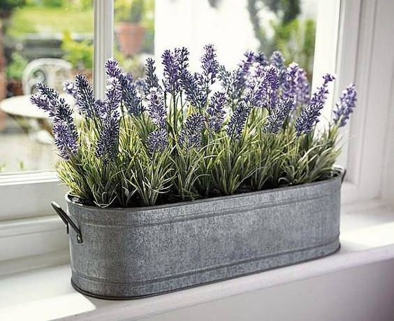cozy plants for comfy the bedroom