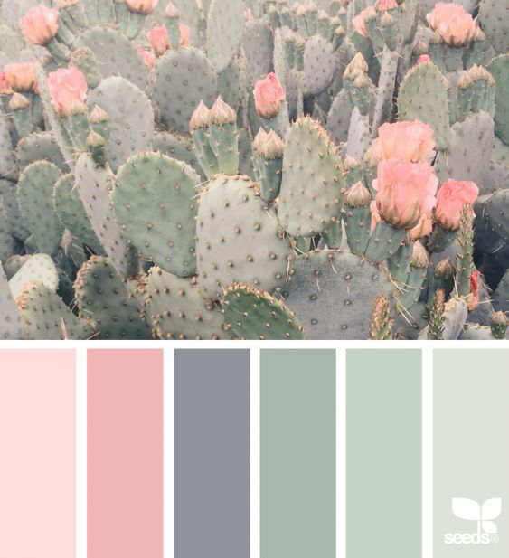 cacti colors for soft bedroom